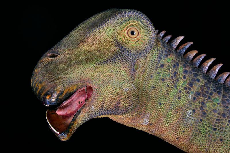nigersaurus-02